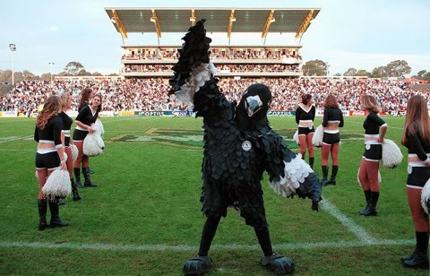 Campbelltown Stadium Mark the Magpie